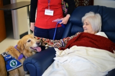Dog with patient 3