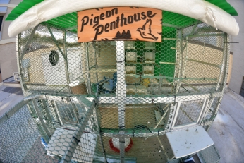 The Pigeon Penthouse!