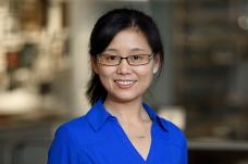 Dr. Meng Wang