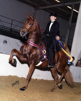 Nancy Moreno and horse 3